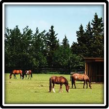 Horseshoe Stables near Elk Forge